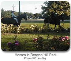 Horses in Beacon Hill Park